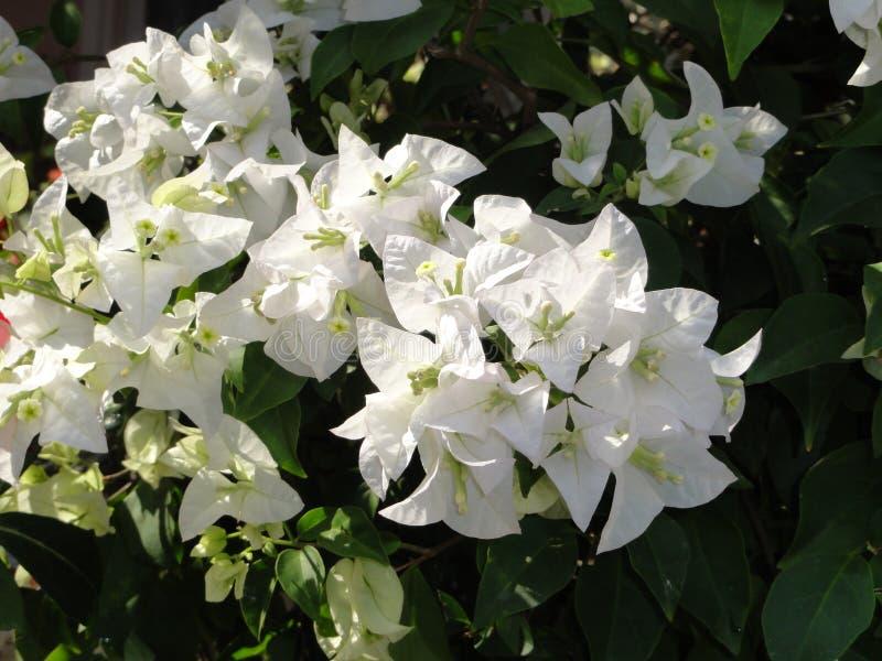 Fiori e giardino immagine stock libera da diritti