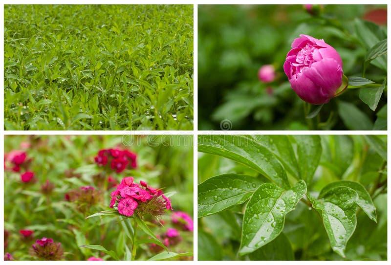 Fiori e piante del collage. fotografie stock libere da diritti
