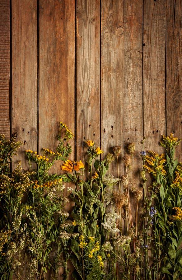 Fiori e piante naturali del prato di fine dell'estate su fondo di legno d'annata immagini stock libere da diritti
