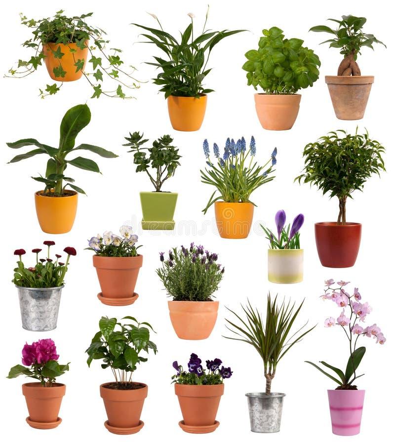 Fiori e piante in POT immagine stock libera da diritti