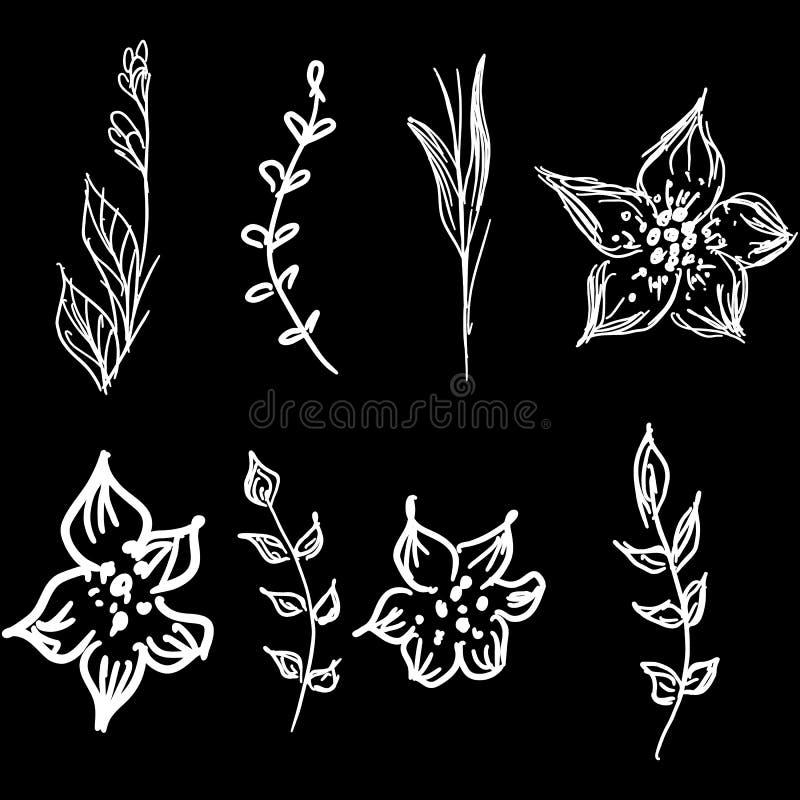 Fiori e raccolta disegnata a mano di scarabocchio dei rami isolata su fondo nero 8 elementi grafici floreali grande insieme di ve royalty illustrazione gratis