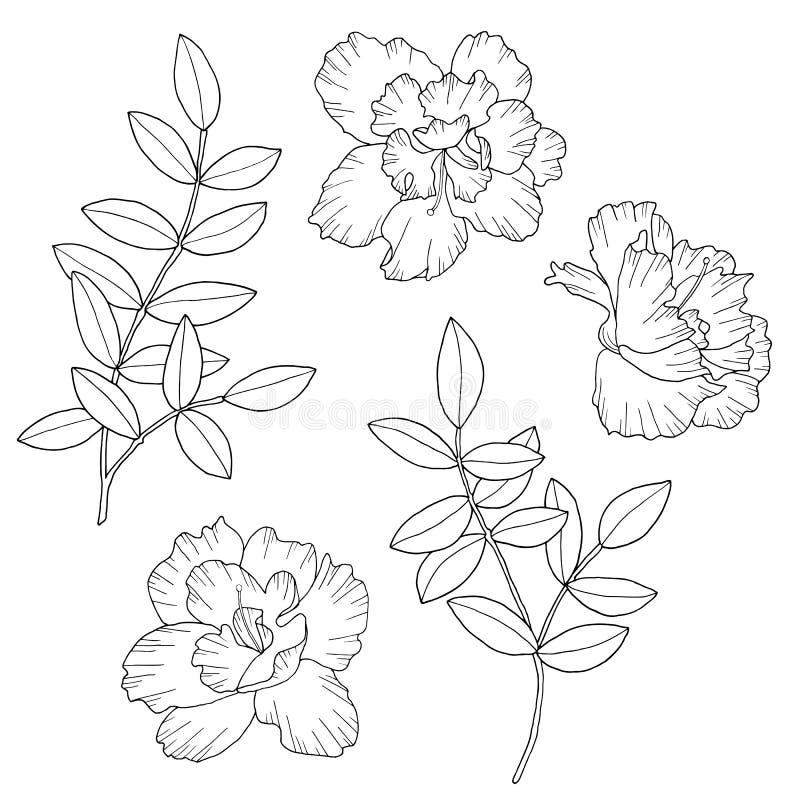 Fiori e rami astratti con le foglie Illustrazione disegnata a mano di vettore Schizzo in bianco e nero monocromatico dell'inchios illustrazione vettoriale