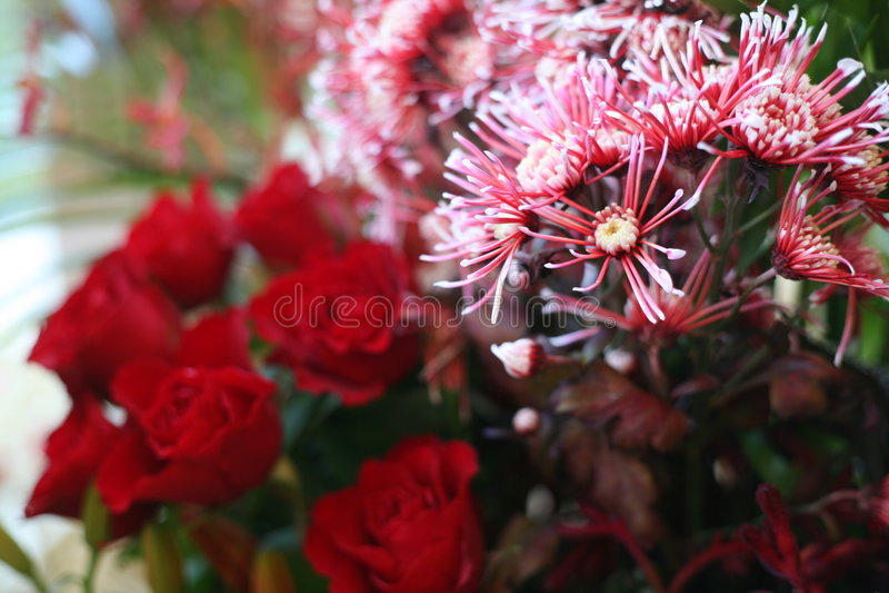Fiori e rose fotografia stock