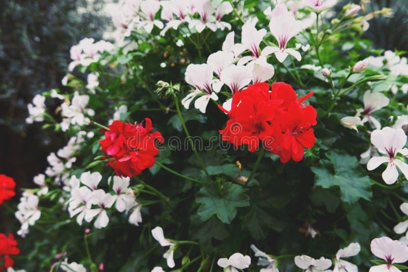 Fiori ed albero di fioritura nella cupola del fiore ai giardini dalla baia, Singapore immagini stock