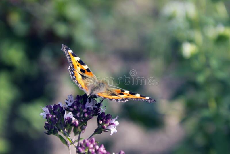 Fiori ed alveari della farfalla fotografia stock