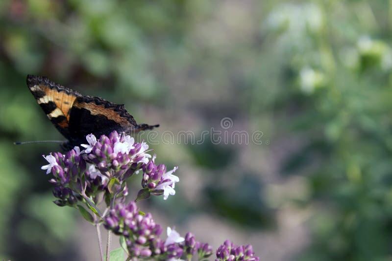 Fiori ed alveari della farfalla immagine stock libera da diritti