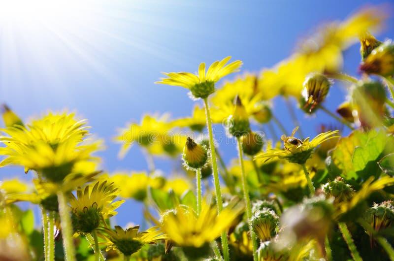 Fiori ed api immagini stock