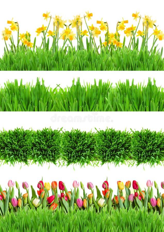 Fiori ed erba della primavera immagine stock