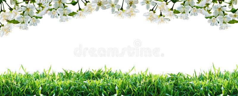 Fiori ed erba verde Bordo della sorgente fotografia stock