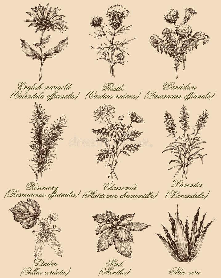 Fiori ed erbe messi illustrazione vettoriale