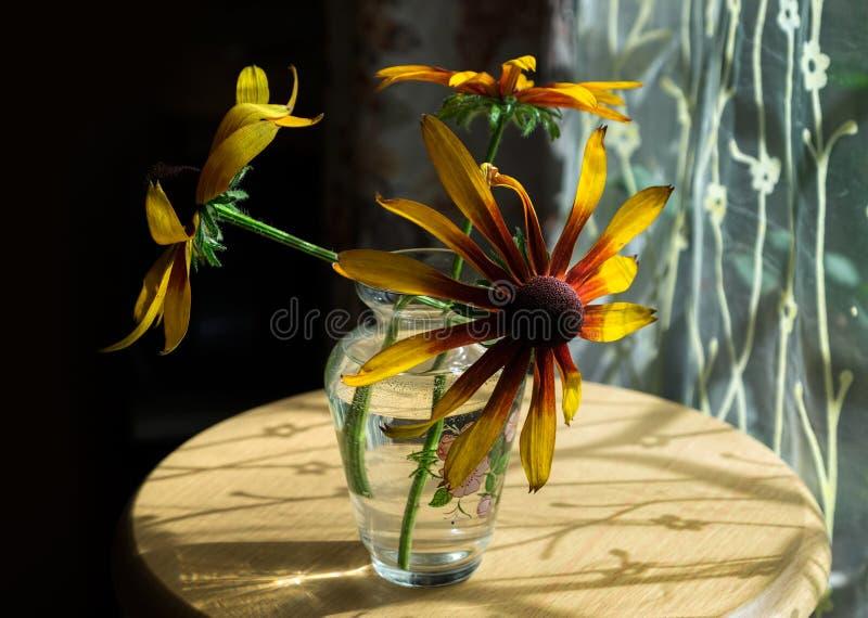 Fiori ed ombre arancio immagine stock