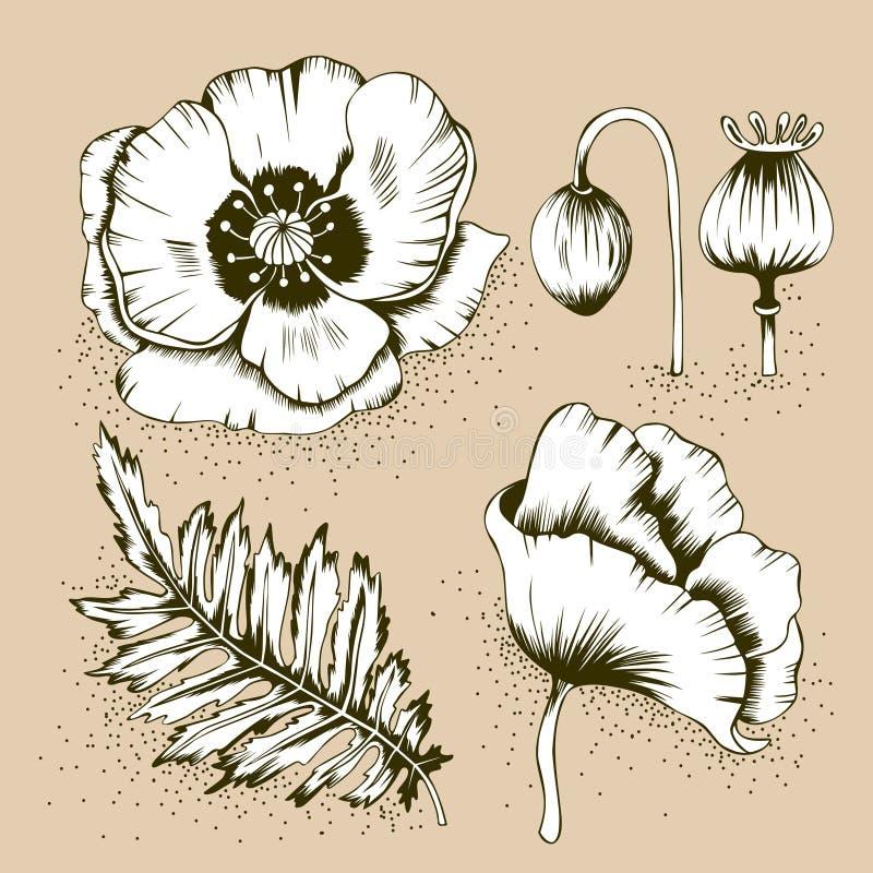 Fiori, foglia, bottone e baccello del papavero illustrazione di stock