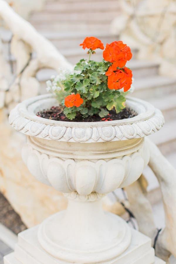 Fiori freschi all'aperto della primavera o di estate immagini stock