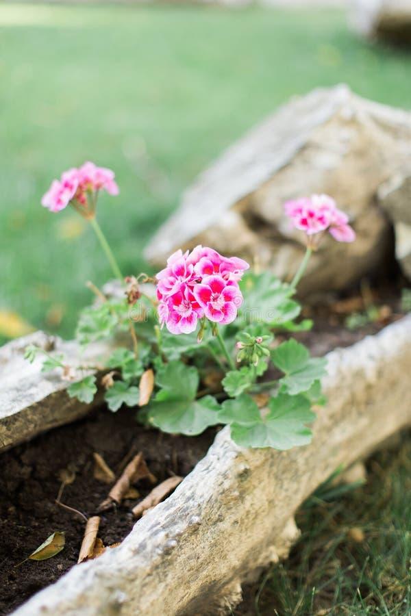 Fiori freschi all'aperto della primavera o di estate fotografia stock