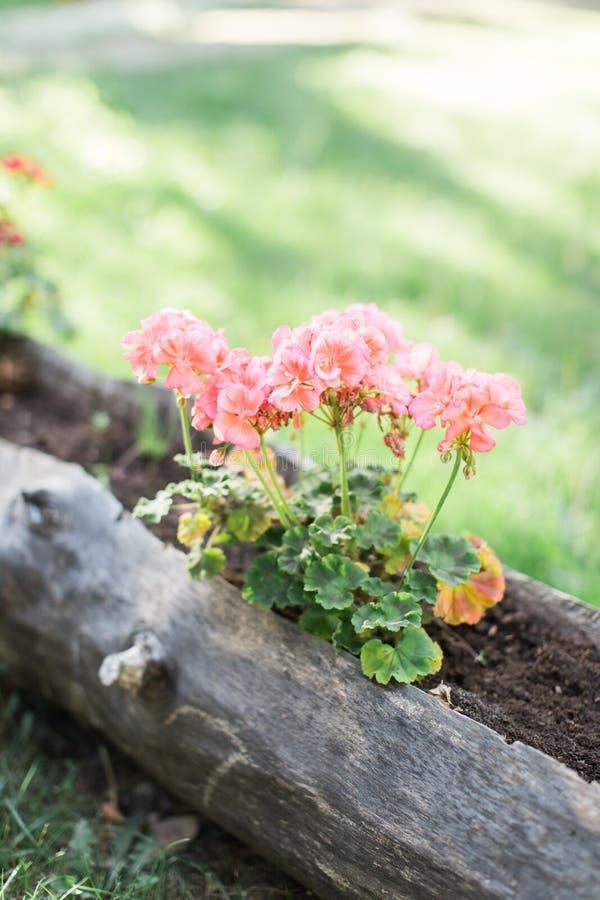 Fiori freschi all'aperto della primavera o di estate fotografia stock libera da diritti