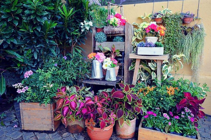 Fiori freschi e piante in primavera Molti vasi da fiori con le piante di fioritura con fondo d'annata fotografia stock