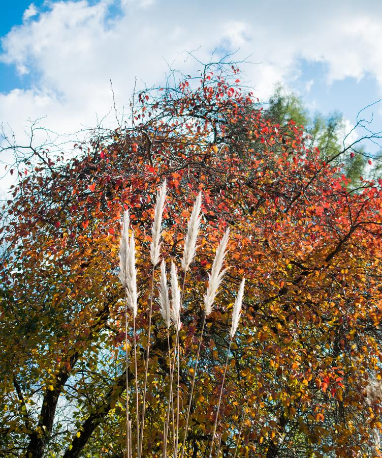 Fiori freschi variopinti bei di fioritura in vista immagini stock libere da diritti