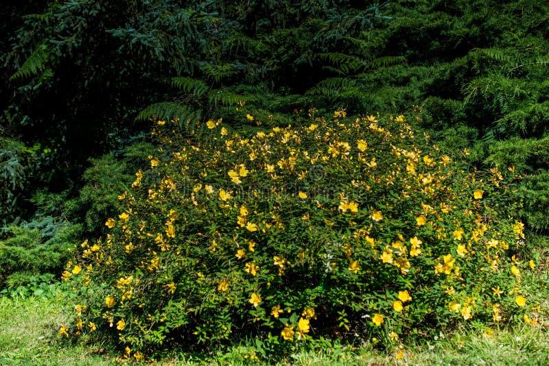 Fiori freschi variopinti bei di fioritura in vista fotografia stock