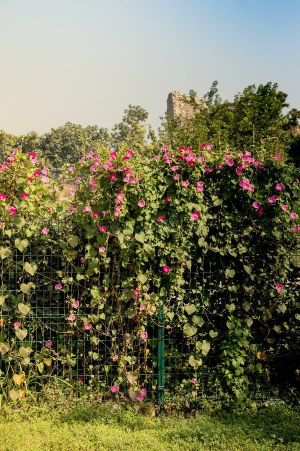 Fiori freschi variopinti bei di fioritura in vista immagine stock