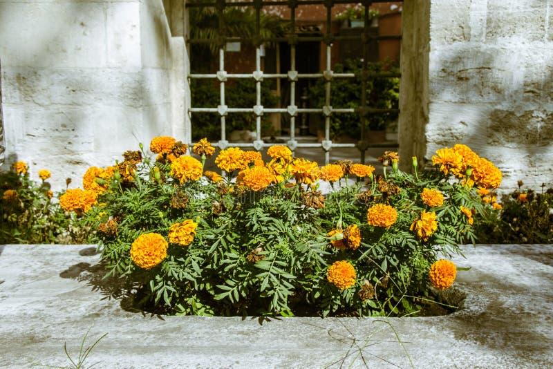 Fiori freschi variopinti bei di fioritura in vista immagini stock