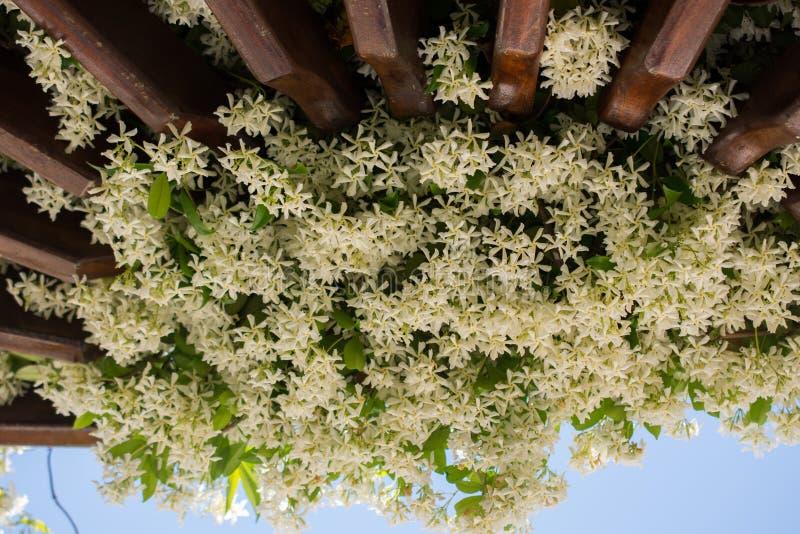 Fiori freschi variopinti bei di fioritura in vista fotografie stock libere da diritti