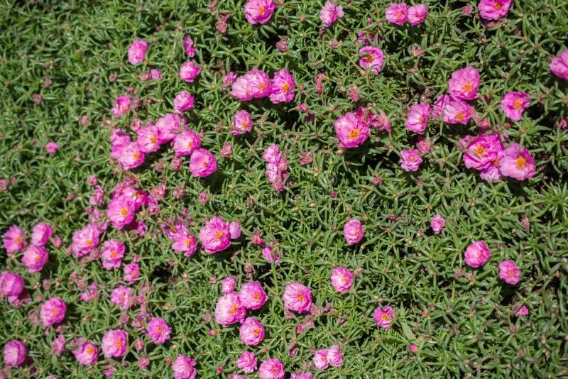 Fiori freschi variopinti bei di fioritura in vista fotografie stock
