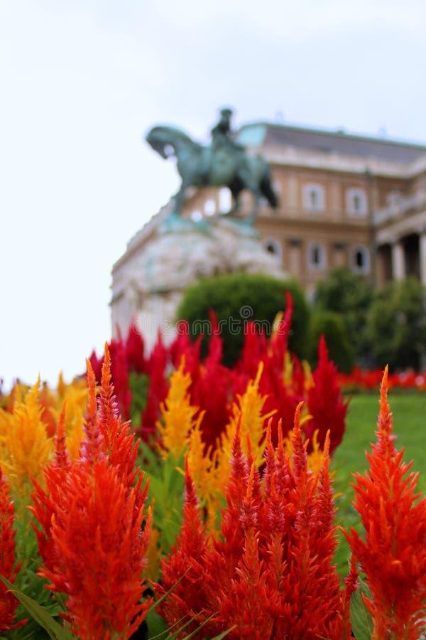 Fiori fuori del National Gallery ungherese fotografia stock libera da diritti