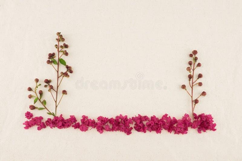 Fiori germoglianti e petalo rosa fotografia stock libera da diritti