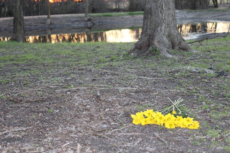 Fiori gialli da un lago fotografia stock libera da diritti