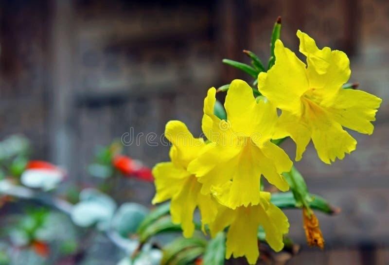 Fiori gialli dell'azalea immagini stock libere da diritti
