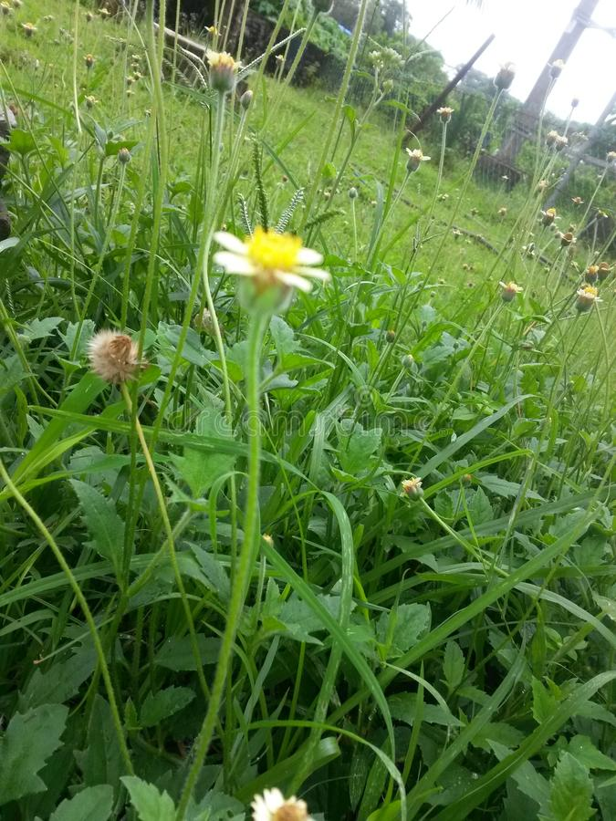 Fiori gialli dell'erba immagini stock libere da diritti