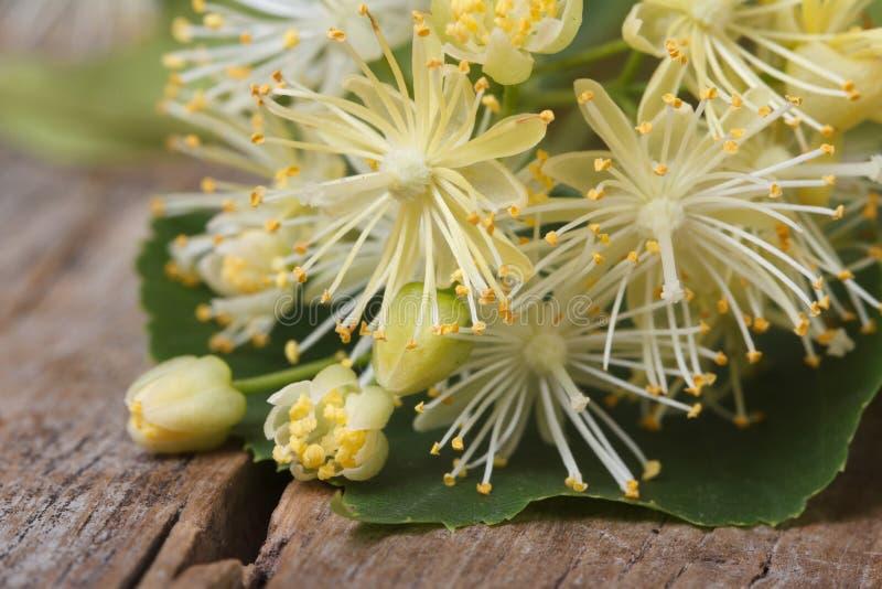 Fiori gialli della macro del tiglio orizzontale fotografia stock