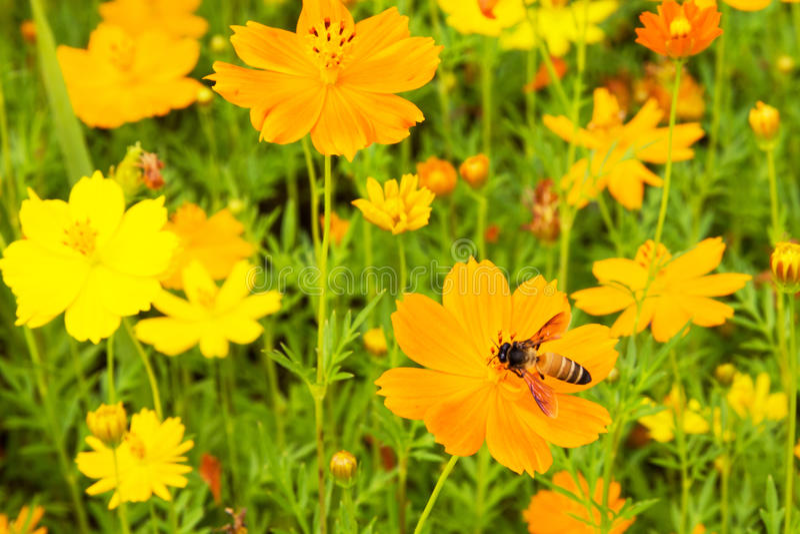 Fiori gialli di estate immagini stock
