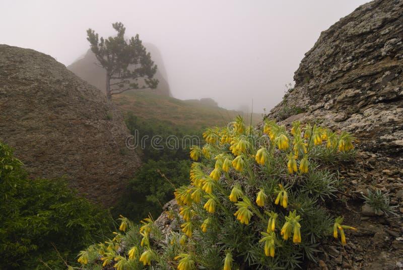 Fiori gialli fra le rocce fotografia stock libera da diritti