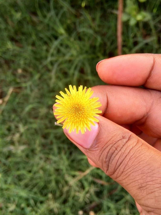 fiori gialli in mio piatto nel arth immagine stock