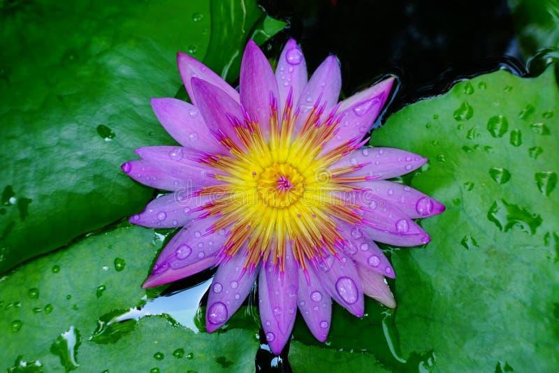 Fiori gialli nel giardino, lo amo, mi tengo ringiovanito i miei fiori di passione a casa immagine stock