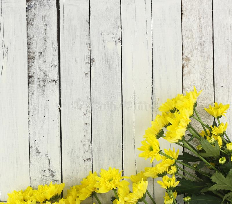 Fiori gialli su legno bianco fotografie stock