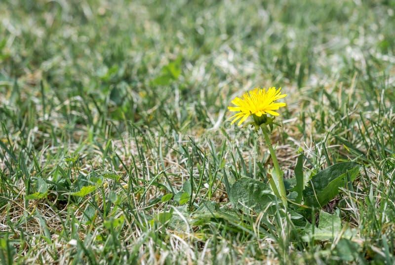 Fiori gialli su terra fotografia stock
