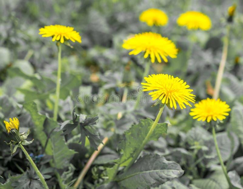 Fiori gialli su terra fotografie stock libere da diritti