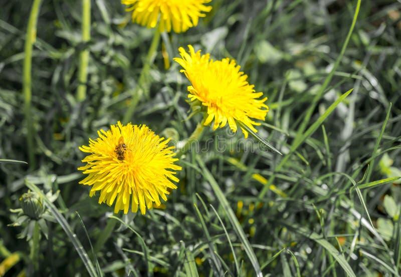 Fiori gialli su terra immagine stock