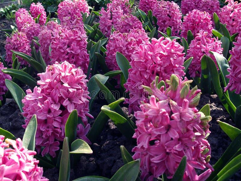 Fiori in giardino immagine stock