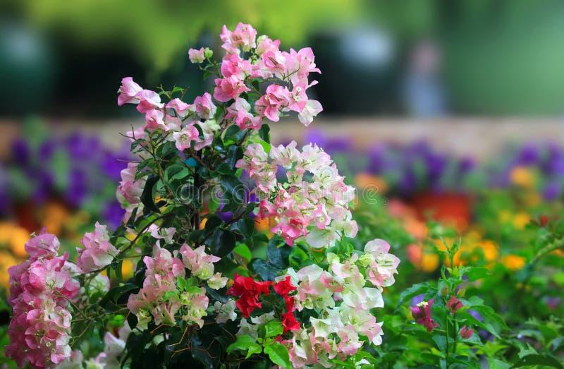 Fiori in giardino floreale immagini stock
