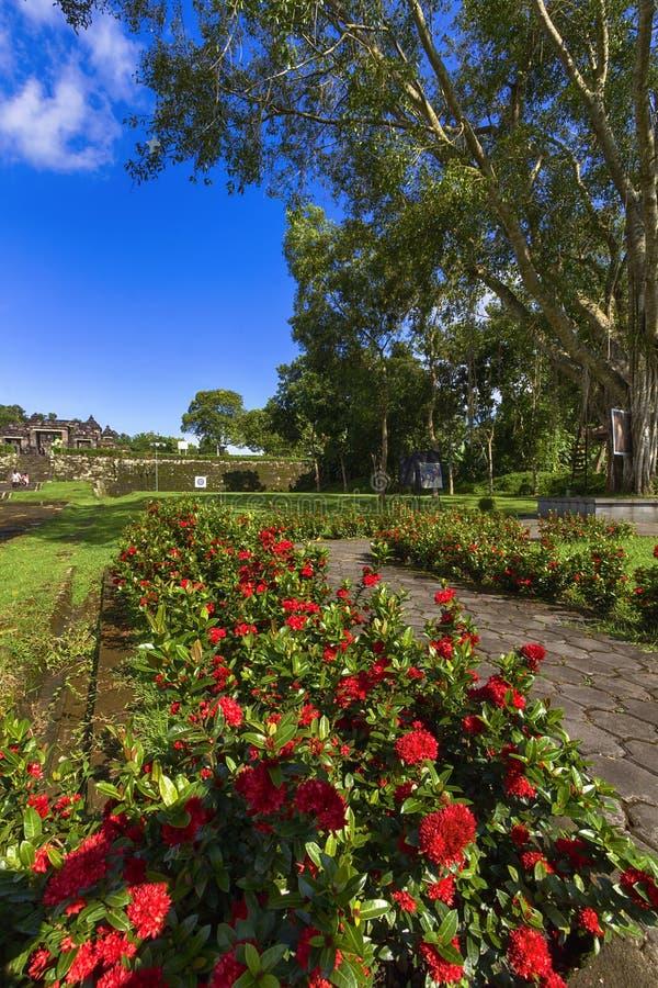 Fiori in giardino Yogyakarta Indonesia immagine stock libera da diritti