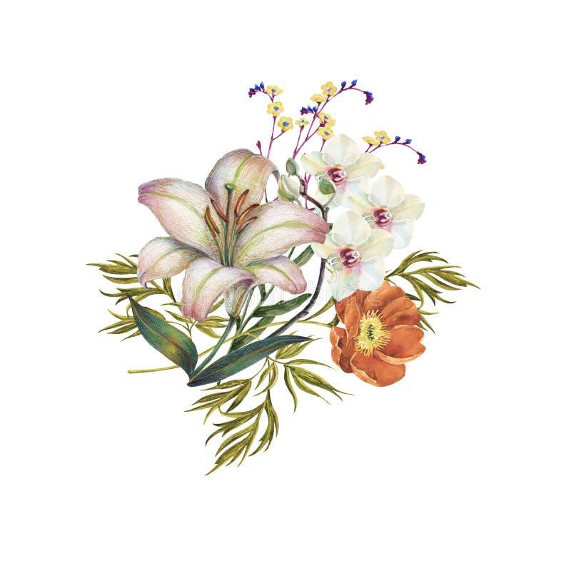 Fiori giglio, orchidea e peonia del mazzo dell'acquerello illustrazione per il disegno royalty illustrazione gratis