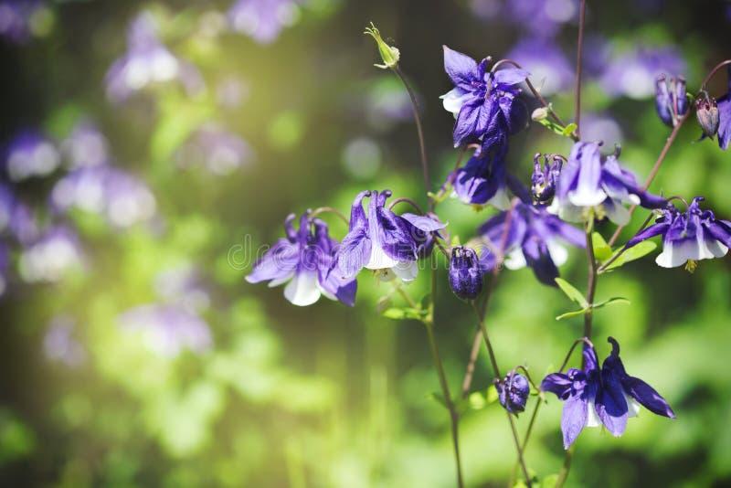 Fiori graziosi della molla, natura di primavera immagini stock