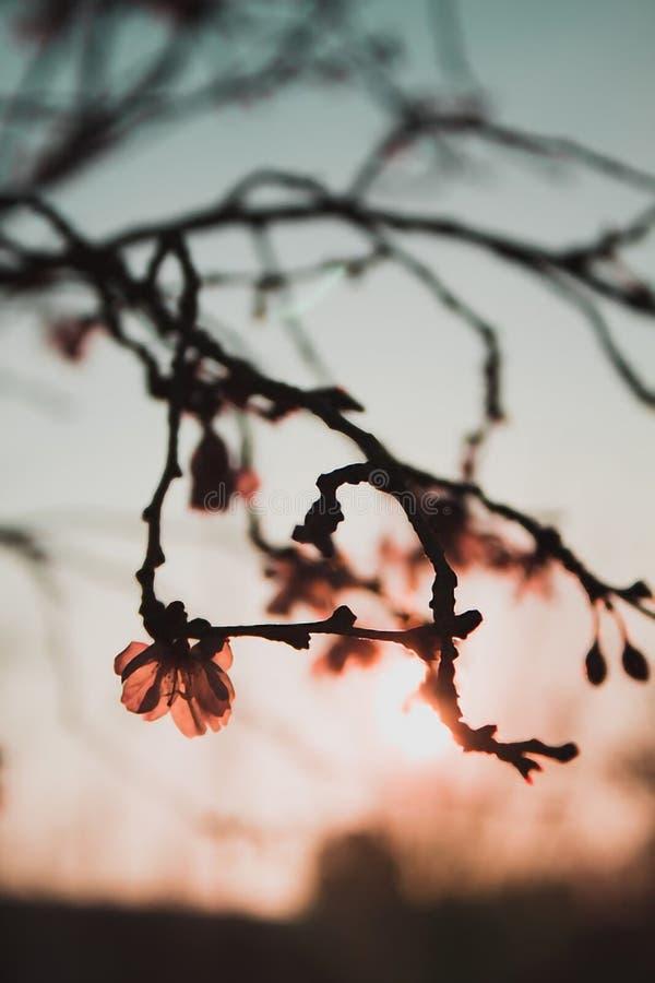Fiori i giorni di primavera immagine stock