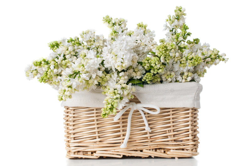 Fiori lilla bianchi in un canestro isolato immagine stock