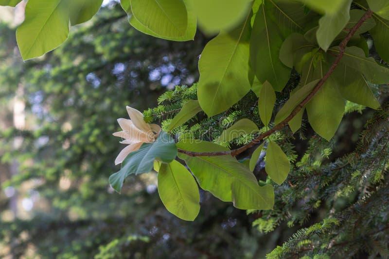 Fiori lilla con le foglie verdi contro cielo blu immagine stock