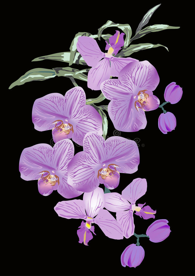 Fiori lilla dell'orchidea su priorità bassa nera illustrazione di stock
