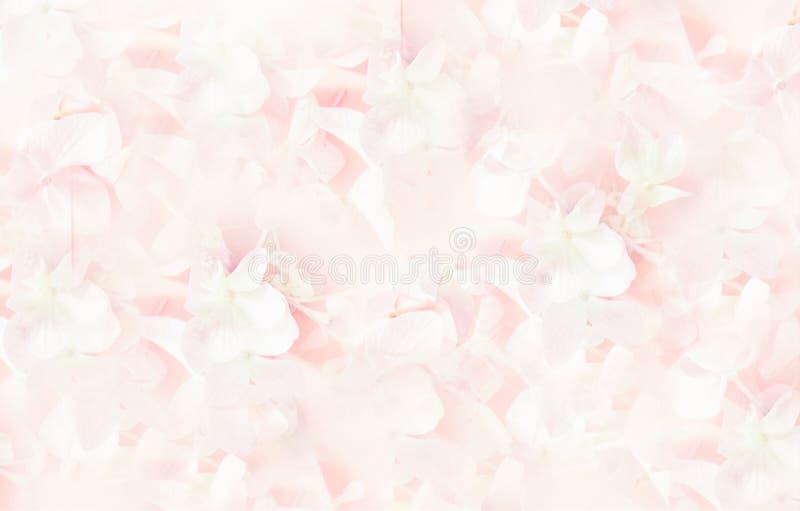 Fiori lilla della molla fresca rosa, fondo, struttura fotografie stock libere da diritti